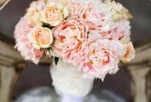 Wedding Ideas / by Sara Resler