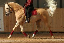 Horses hästar