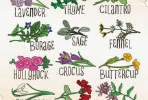 Gardening Infographics /  A Visual Guide to Gardening