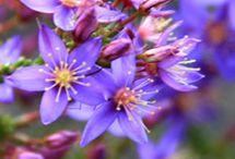 Australia - Native Flora