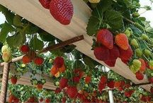 Gardening and organic