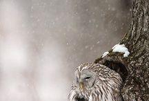 Birds / by Chantal Buslot