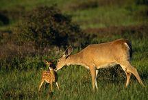 Oh Deer! / by Lisa Sherman