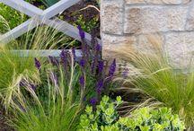 Garden Studio - Plants