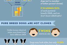 Infografías perrunas