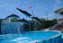Delfines / by Diana Ruiz Fernandez