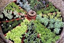 Gardening & Outdoors / by Lynn Larson