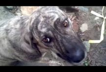 Save homeless street dogs