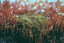 Ch: Briar Moss