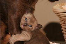 Cuddles / Cute animals / by Jennifer Dyer
