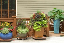 Gardening -  CONTAINER & PLANTING IDEAS / Great ideas for flower pot arrangements.  Also many planting tips for the gardener. / by Cammie Jordan