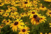 Garden - Full Sun