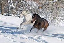 fredoom horse / özgür atların asaleti