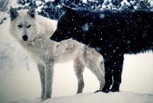 Animals / by Taylor Bir