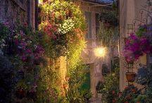 Desde el Jardín...