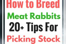 Backyard Meat Production / Learn how to raise small animals for meat in your urban back yard!