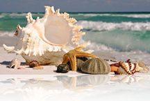 She sells sea shells.. / by Elizabeth Collins
