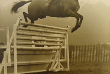 Old horse pictures