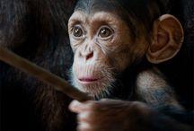 Amazing & Cool Animal Photography / Stunning images of animals
