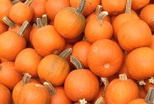 Pumpkins! / Fun and colorful pumpkins for fall decorating