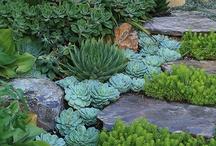 Succulent gardening / Succulent gardening