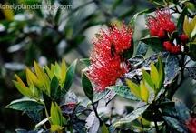 Rongoa Plants / Traditional Maori Medicinal Plants