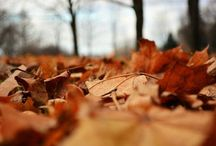 Autumn / Plants with fall color and late season blooms and seasonal gardening tasks.