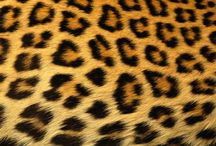 Leopard/Cheetah Print / by Monica Gomez