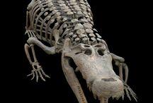 骨格標本と化石