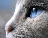 Beloved Feline Four Leggeds.. / To know a cat is to love ALL cats.