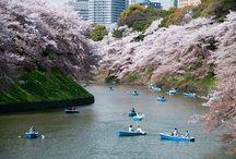 fiori di fiume.