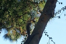 Squirrely Squirrels! / Oh, squirrels, why are you so cute and fwuffy?