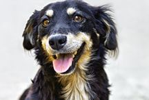 Mutt-tastic! / The joys and benefits of mixed breed dogs