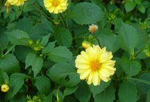 Fotóim*My photos / Fotózok itt-ott, főként növényket.