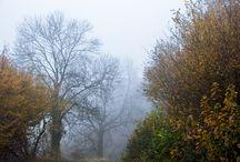 Mist / Foto's in de mist