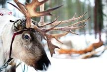Office Santa Claus. Leponia, Finlandia.