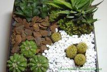 Mini jardins