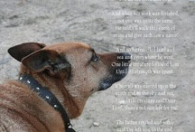 Pet Quotes, Poems, and Sayings / by Woundwear Woundwear