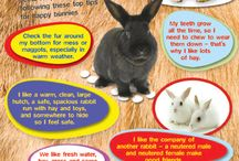 Pet Care / Tips and tricks for raising, and training small animals from dogs and cats to rabbits and ferrets