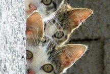 cats amszing