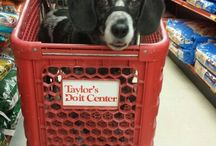 Pets out and about / Pets in stores and other places where you wouldn't expect to see them / by Furrygodmom