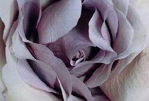 Fleur de Bloom