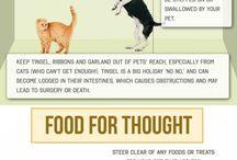 Pets / Work insipirations
