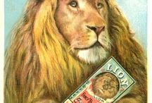 Vintage Lion Coffee / Sharing Lion Collectibles dating back to the 1800s