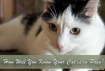 Furbabies: Kitty Kat / by Jamie Enochs