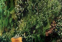 Plantas, plantas, plantas