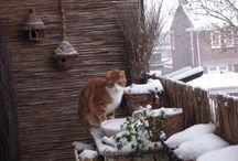 My cats / Bob en Doortje