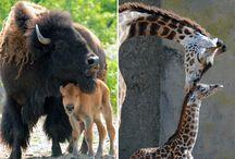 Eläinäidit ja poikaset