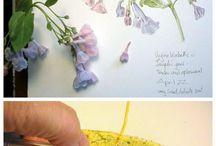 Watercolor Nature Journaling