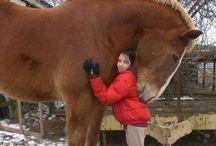 Ťažné kone